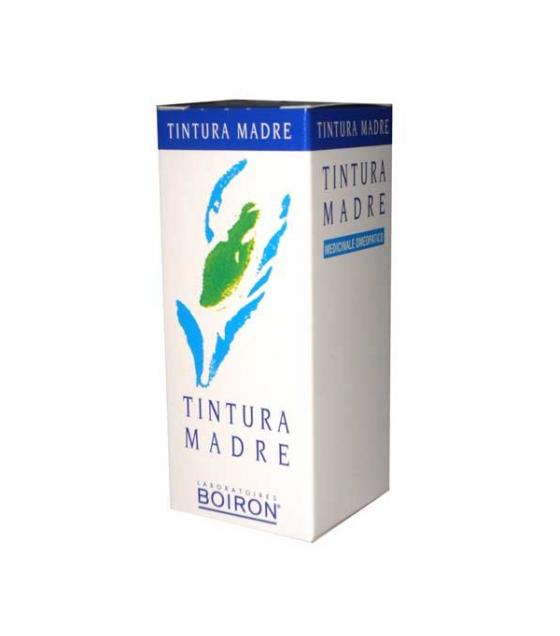 Ribes Nigrum 60ml Tm